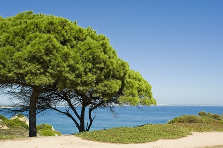 View of bright green trees on the cliffs overlooking the Mediterranean sea