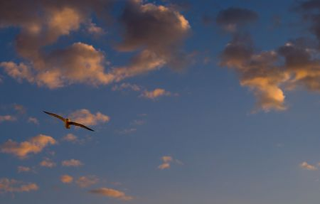 sunset and seagull and ocean Stock Photo - 2661759