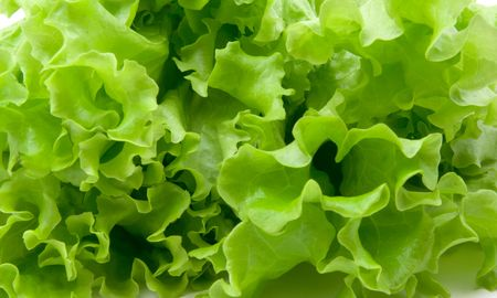 green summer lettuce as background Stock Photo