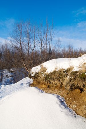 birch and yellow sand, snow, blue sky Stock Photo - 2824604