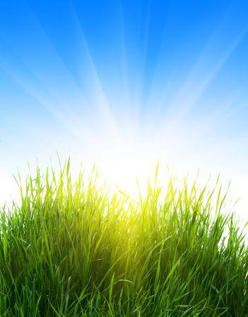 grass and beautiful sunlight Stock Photo - 3270911