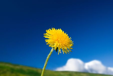 yellow dandelion and cloudy sky Stock Photo