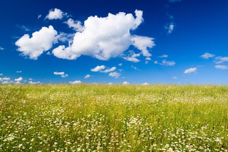 field of daisies and perfect sky Stock Photo - 3402336
