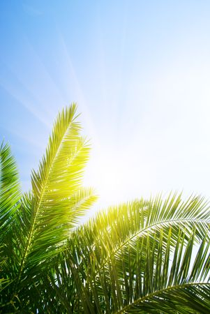 green palm and morning sun Stock Photo - 3402323