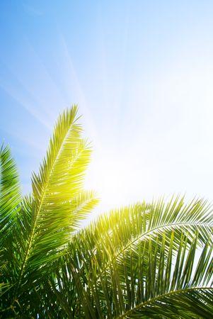 palmeras: Palm Green y sol por la ma�ana