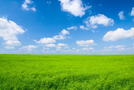 perfect meadow and perfect blue sky Stock Photo - 3422178