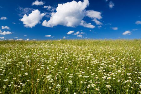 field of daisies and blue sky Stock Photo - 3422214