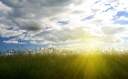 summer green grass and sunset Stock Photo - 3422172