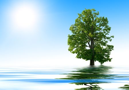 one tree and rendering water photo