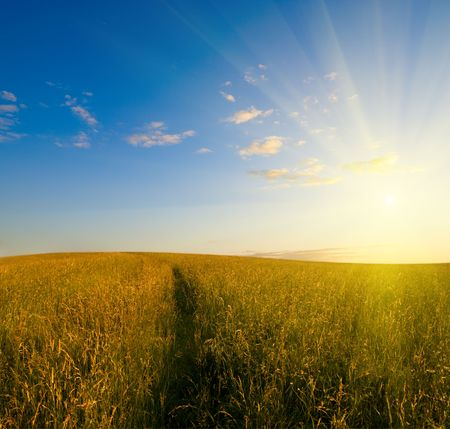 sunset and field of grass Stock Photo - 3476291