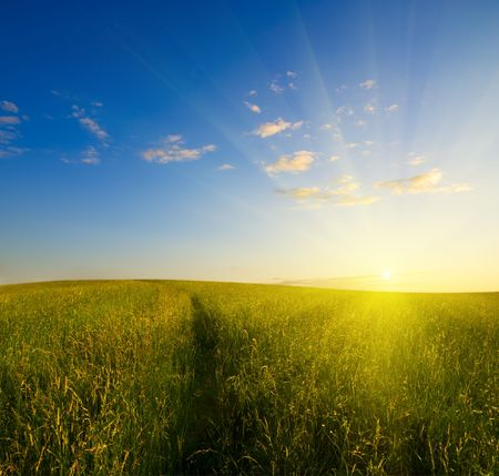 field of grass and sunset Stock Photo - 3518357