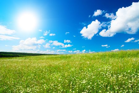 field of daisies and perfect sky Stock Photo - 3543958
