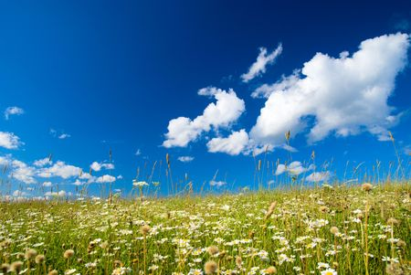 field of daisies and perfect sky Stock Photo - 3543959