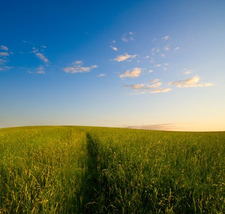 field of grass in time of sunset Stock Photo - 3543960
