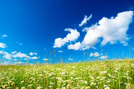 field of daisies and perfect sky Stock Photo - 3584774