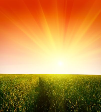 field of grass and sunset Stock Photo - 3584772