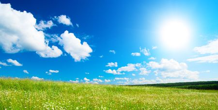 field of daisies and perfect sky Stock Photo - 3610320