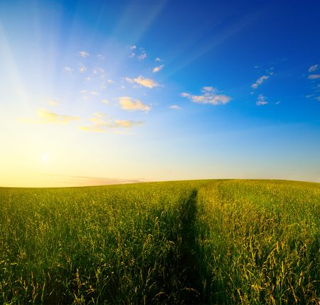 field of grass in time of sunset Stock Photo - 3610347
