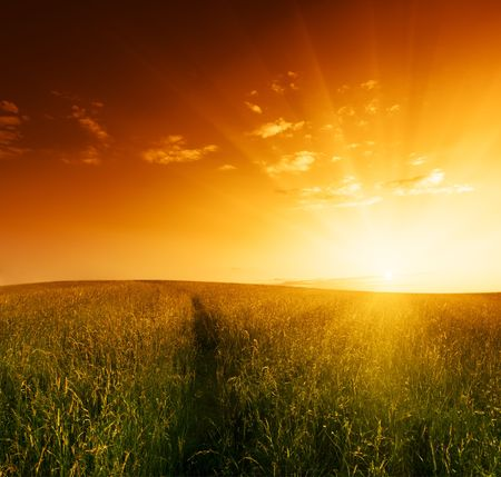 autmn: field of grass and sunset