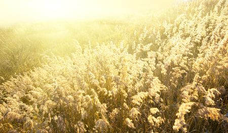 autumn yellow grass and sunset Stock Photo - 3801775