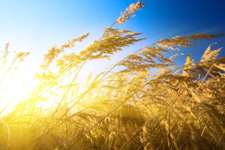 autumn yellow grass and sunset Stock Photo - 3881793