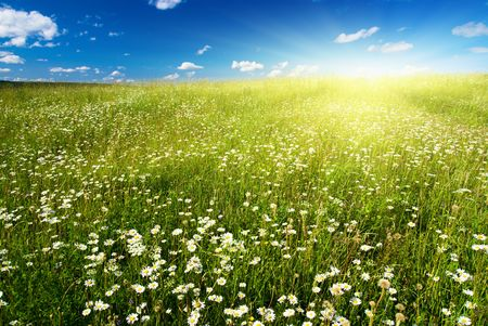 field of daisies and perfect sky Stock Photo - 3932725