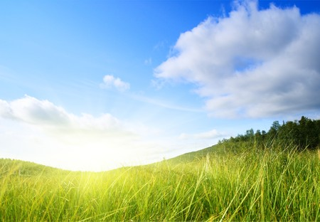 grass and perfect blue sky Stock Photo