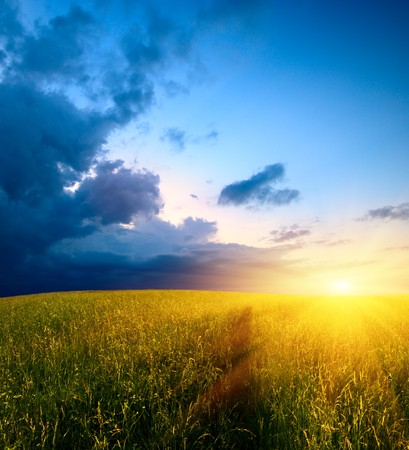field of grass and sunset Stock Photo - 4007156