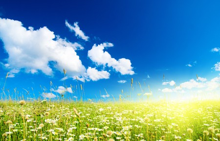 field of daisies and perfect sky Stock Photo - 4030794