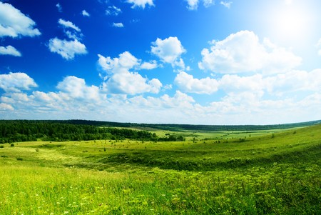 summer sun and field of flowers Stock Photo - 4061450