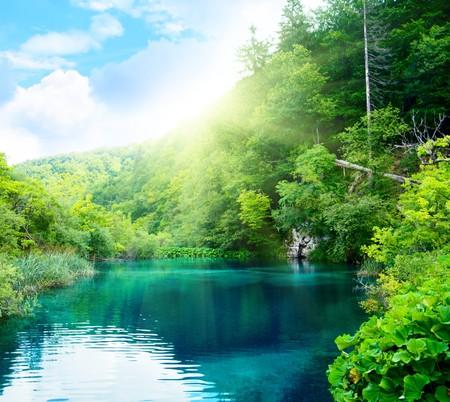 깊은 숲에서 호수 스톡 콘텐츠