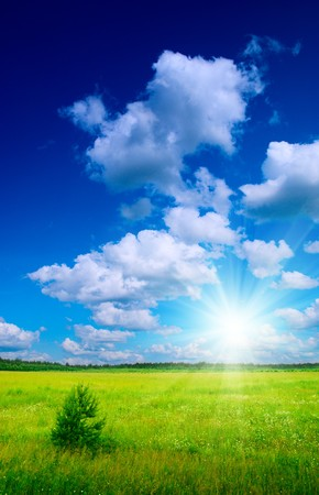 field of daisies and perfect sky Stock Photo - 4141759