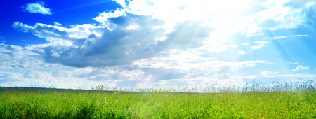 field of fresh summer grass and clouds Stock Photo
