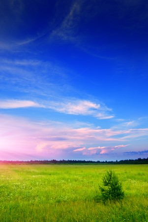 field of daisies and sunset Stock Photo - 4174570