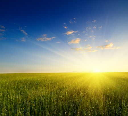 field of grass and sunset Stock Photo - 4466439