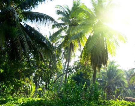 jungle of Thailand photo