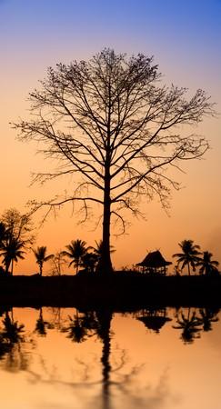 sunset in jungle photo