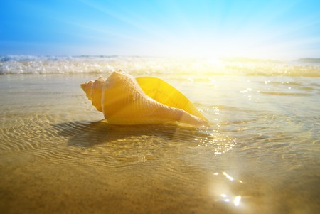 seashell sand and ocean photo