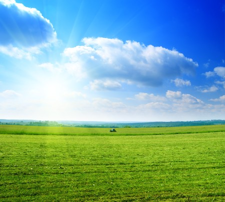 field of harvested summer grass Stock Photo - 4502497