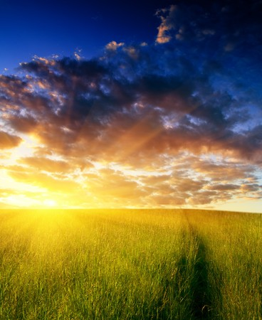 field of grass and sunset Stock Photo - 4502484