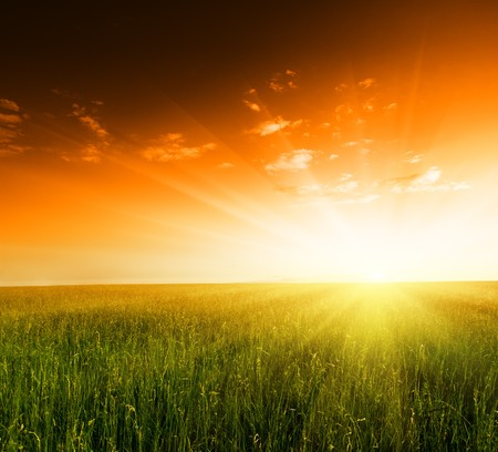 field of grass and sunset Stock Photo - 4502489