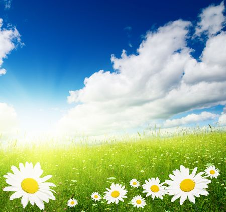 field of daisies and perfect sky Stock Photo - 4589487