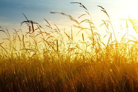 autumn yellow grass and sunset Stock Photo - 4589500