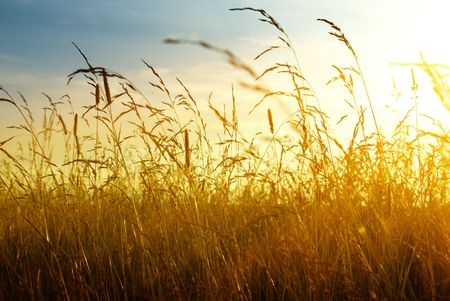 autumn yellow grass and sunset Stock Photo - 4589500