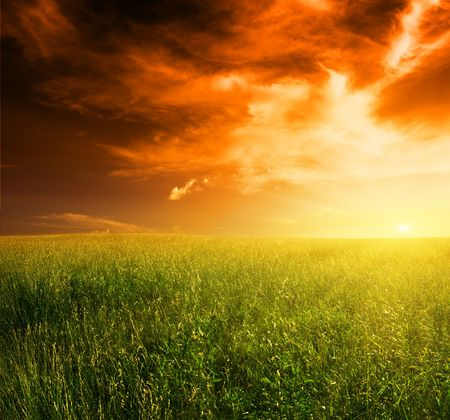 field of grass and sunset Stock Photo - 4589495