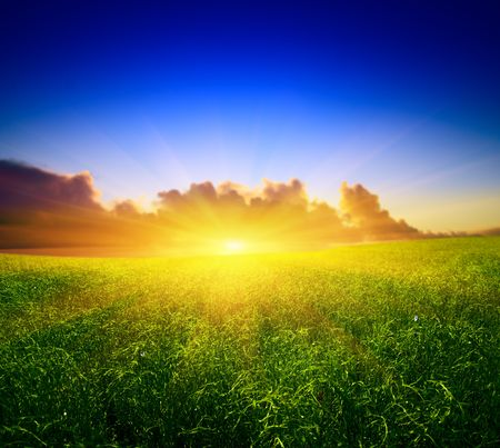 field of grass and sunset Stock Photo - 4635419