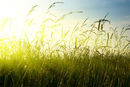 grass and sunset photo