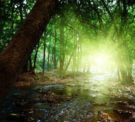 houtsoorten: rivier in het diepe woud