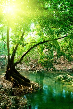 river in deep forest photo