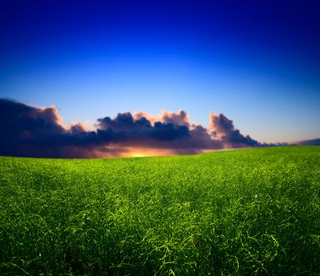 field of grass and sunset Stock Photo - 4703845